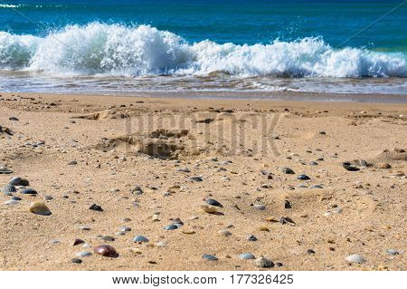 Low angle shot of seashelss on the beach with foamy wave on the background. Shallow focus, DOF