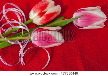 Beautiful Bouquet Of Tulips On A Red Background