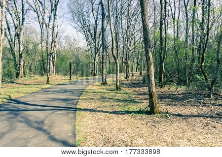 paved walking path through quiet forest outside