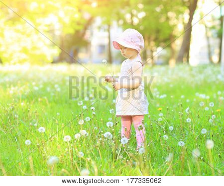 Little girl with dandelions in the park on a sunny day