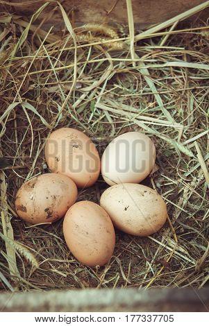 Organic fresh eggs on straw in rustic style