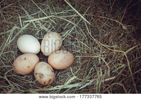 Organic fresh eggs on straw in rustic style