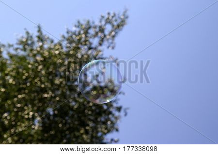 Travel to Arkaim Russia. Russian birch tree and a soap bubble.