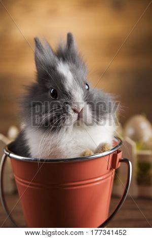 Animal easter, Baby bunny, egg