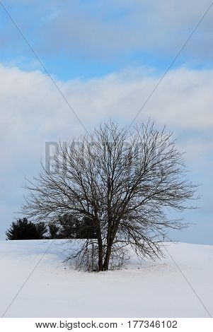 Barren tree in a bright white snowfield under a blue sky