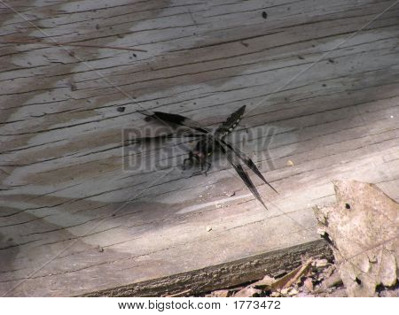 Dragon Fly on Patterned Plywood