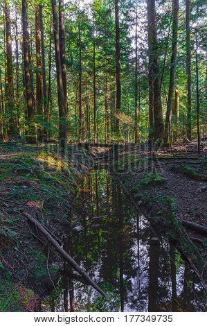 Ditch with water in the wet forest in British Columbia Canada with dead trees around