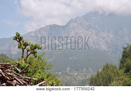 Taurus mountains in the clouds with a little tree in the foreground