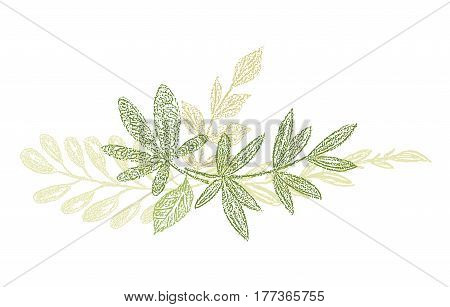 Green botanical hand drawn leaf composition. Vector greenery branches isolated on white background. Botanical spring doodles