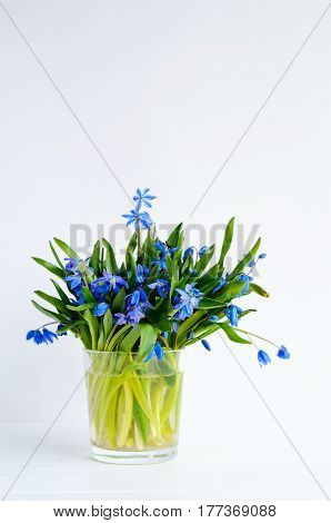 Bunch Of Tender Squill (scilla, Galanthus) Blue Flowers In A Glass With Water On White Background