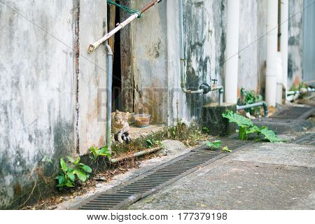 Stray cat in town asia winter, Hong Kong