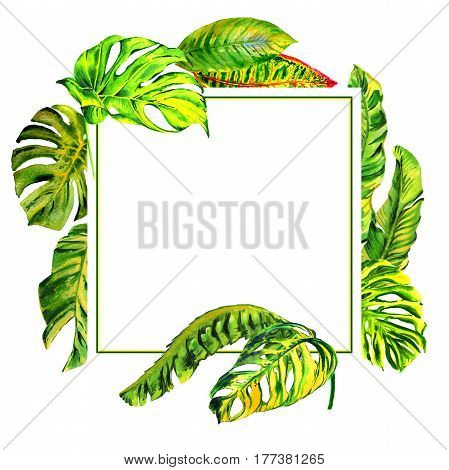 Tropical Hawaii leaves palm tree frame in a watercolor style isolated. Aquarelle wild flower for background, texture, wrapper pattern, frame or border.