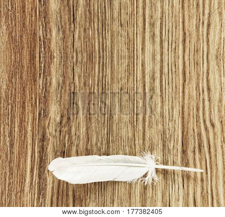 White bird feather on grunge wooden background taken closeup with empty space for text.