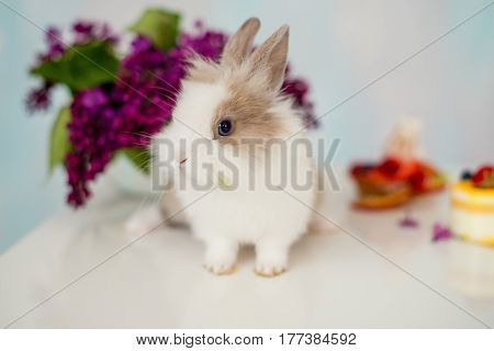 Furry white rabbit with a red spot and cupcake. Bouquet of lilac in the background
