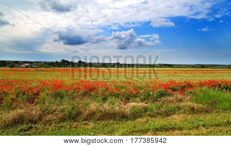 Red poppies on a field the sky and the clouds and the village in the distance