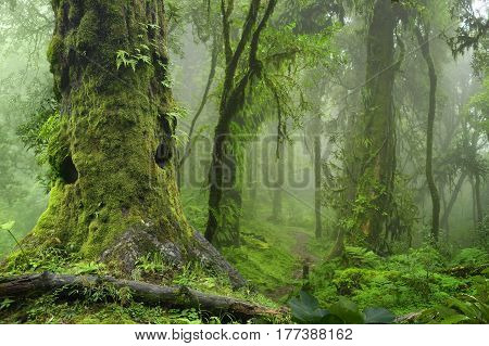 Sub-tropical jungle of Nepal in the Annapurna area