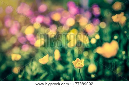 Dreamy flowers bokeh background with lens flare