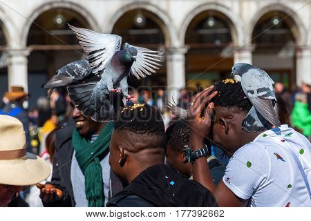 People Feeding Pigeons On The St. Marks Square In Venice