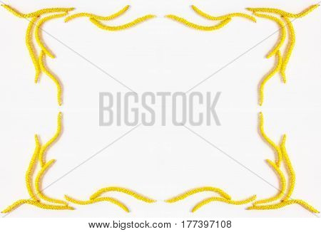 abstract spring floral frame yellow flowers of the hazel on white background with space for text. Flat lay top view