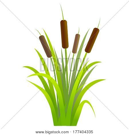 Water Reed Plant Cattails Green Leaf Grass Environment Swamp, Lake and River. Vector illustration