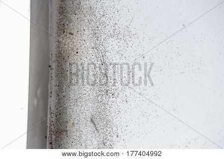 A wall with harmful spreading black mold. Unhealthy living conditions humid home concept. poster