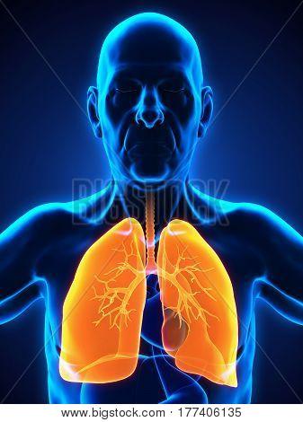 Elderly Male Respiratory System  Illustration. 3D render