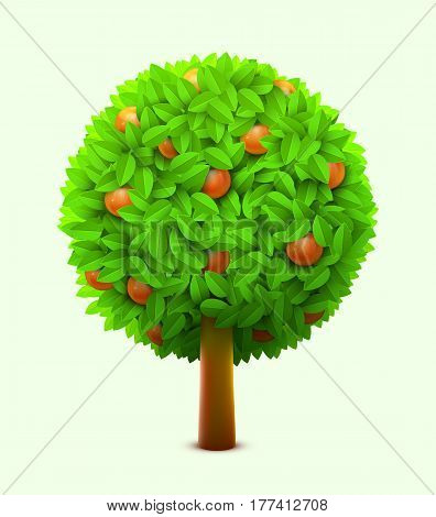 Cute orange or mandarin tree with green leaves and ripe oranges. Realistic citrus tree. Eco harvest concept. Vector illustration