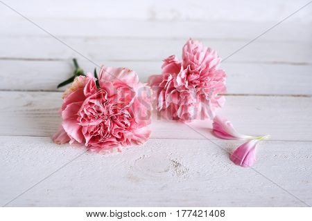 Tender still life with pink carnation blossoms for mothers day or wedding in vintage style