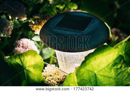 Close Up Decorative Small Solar Garden Light, Lanterns In Flower Bed. Garden Design. Solar Powered Lamp