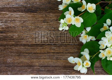 Jasmine fresh flowers and leaves border on textured wooden background