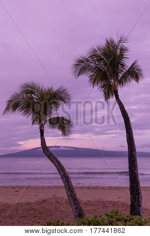 a beautiful sunrise with silhouetted palm trees on a Maui beach