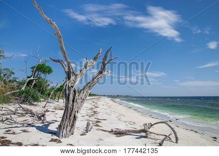 Remnants of trees on the south end of La Costa Island near Captiva Florida