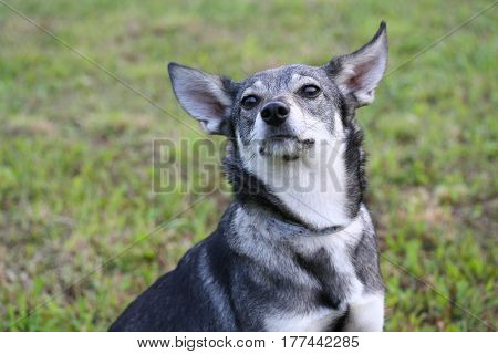 Cute Small Dog Sitting On The Lawn