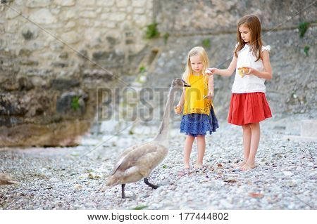 Two Adorable Little Girls Feeding Young Swan On A Pebble Beach