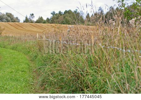 Rural Road And Field