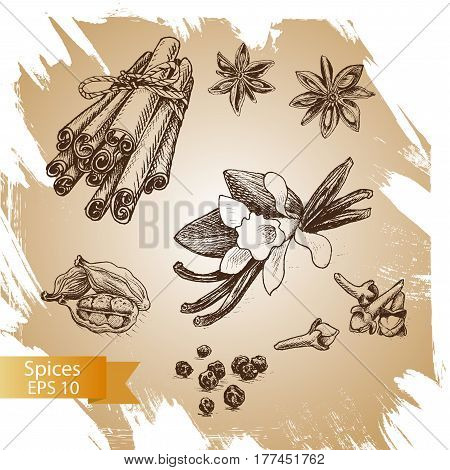 Vector Background Sketch Star Anis, Clove, Cardamom, Vanilla, Cinnamon.
