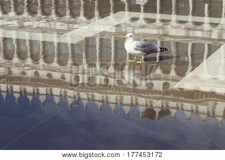 one seagull standing in scenic water reflection at famous St.Mark Square in Venice Italy