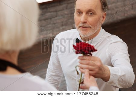 Love you forever. Gallant charming cheerful elderly pensioner taking part in the art performance with his wife in the dance studio while expressing love and giving red rose