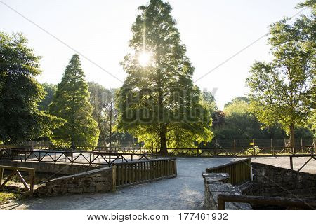Photo of a park with trees, wood railings and sunlight