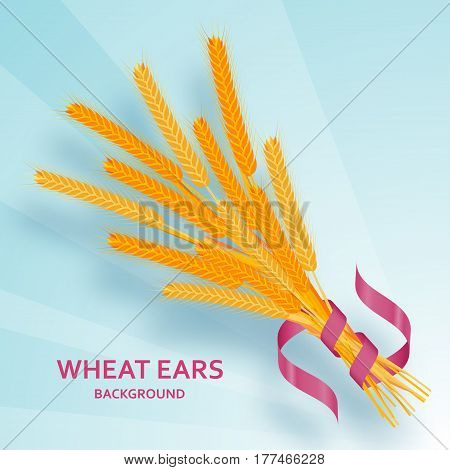 Cartoon background with wheat ears and ribbons.  Colorful vector
