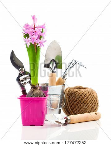 hyacinth flower with garden tools for seedlings on a white background