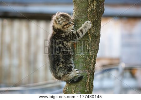 tabby kitten trying to climb a tree