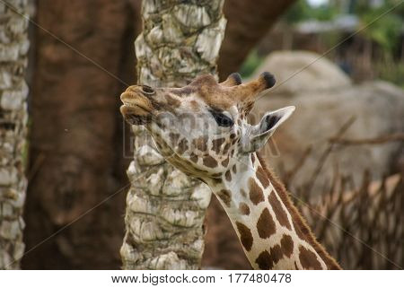 Image of giraffe head and neck in zoo