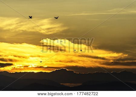 Silhouette Storks bird at sunset,a flock of storks fly in the sky