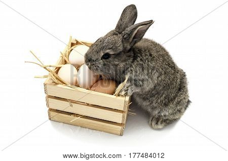 Cute little easter bunny with wooden box full of easter eggs isolated on white background. Gray rabbit.