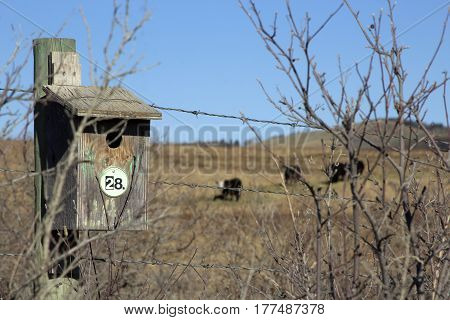 bird box hiding behind a thorny bush with a farm field and cows in the background
