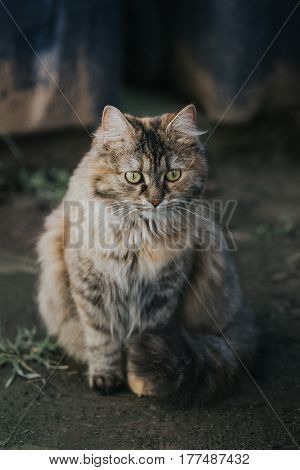 Domestic cat sitting outside in front of the camera. Photographed slightly above eye level.