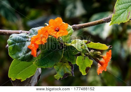 A close-up photo of many small orange flowers on a tree branch. New Providence, Nassau, Bahamas