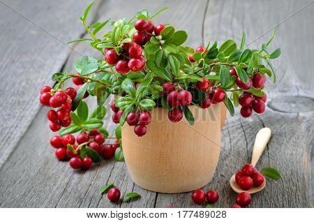 Bouquet of red cowberry in wooden bowl on rustic table