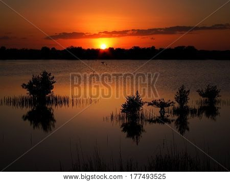 Mangroves in marshlands of the Indian River near Titusville, Florida at sunset.